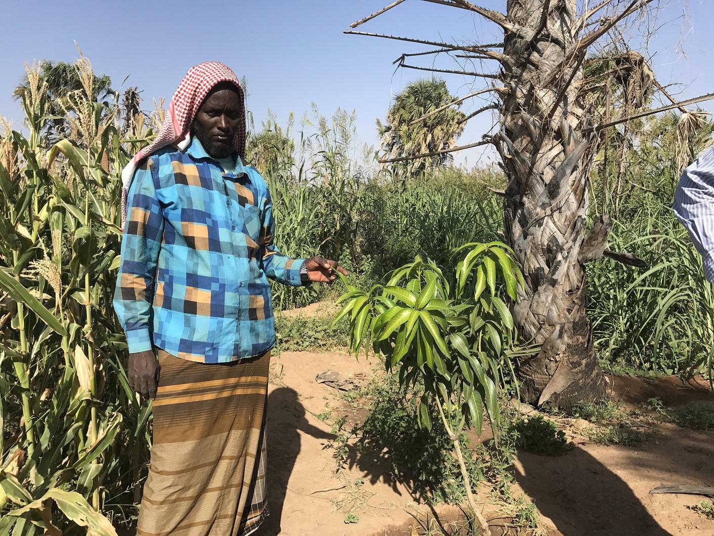 מוחמד איברהים עומד בגאווה ליד אחד מעצי המנגו המורכבים שצפוי להניב פרי בעוד שנתיים (בניגוד לעצי מנגו רגילים שמניבים אחרי כשש שנים) | תמונה: Lisa Sim/Epoch Times